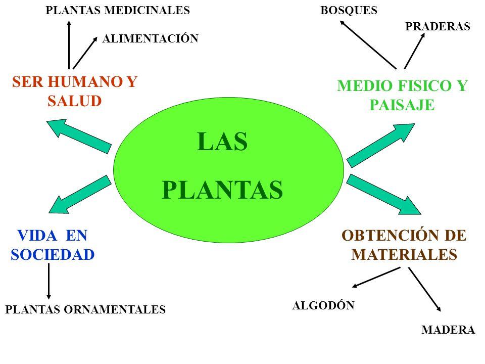 LAS PLANTAS SER HUMANO Y SALUD MEDIO FISICO Y PAISAJE VIDA EN SOCIEDAD OBTENCIÓN DE MATERIALES PLANTAS MEDICINALES ALIMENTACIÓN BOSQUES PRADERAS PLANT