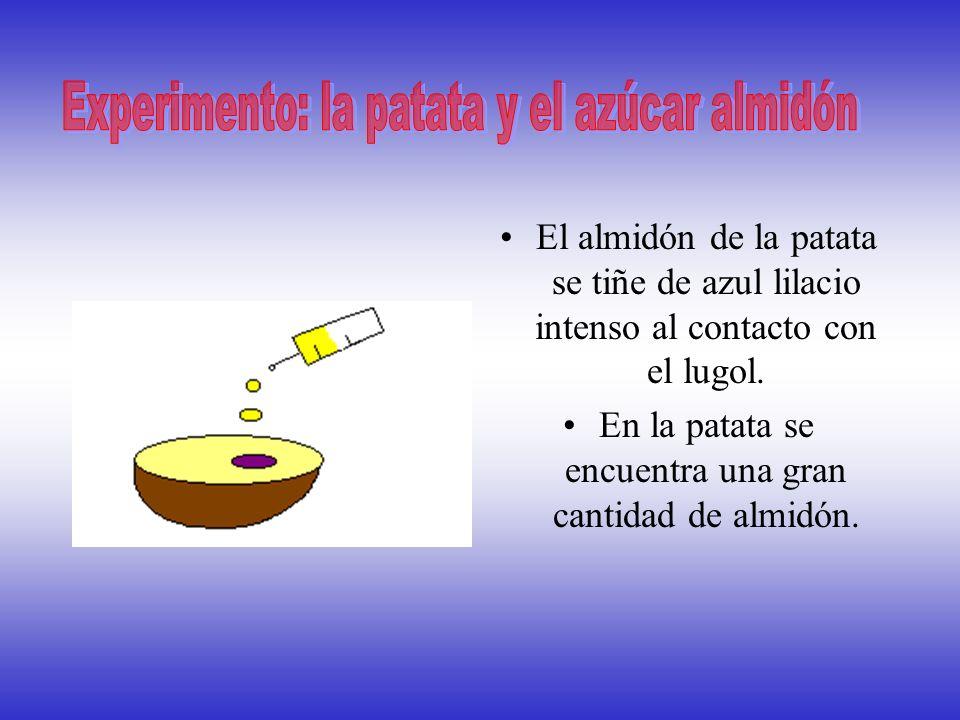 AZUCARES O GLUCIDOS La patata, la harina... son alimentos que contienen gran cantidad de almidon. El almidon es un azucar formado por muchas glucosas.