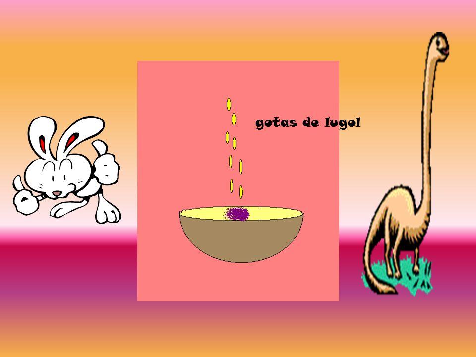 Azúcares o glúcidos La patata,la harina...son alimentos que contienen gran cantidad de almidón.