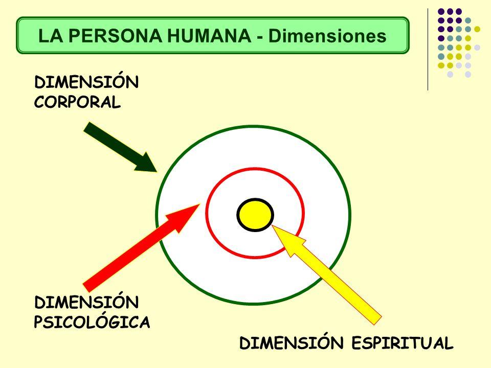 DIMENSIÓN CORPORAL DIMENSIÓN PSICOLÓGICA DIMENSIÓN ESPIRITUAL LA PERSONA HUMANA - Dimensiones