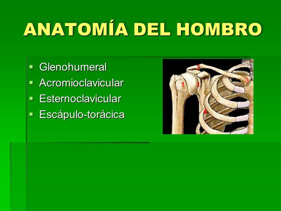 ANATOMÍA DEL HOMBRO Glenohumeral Glenohumeral Acromioclavicular Acromioclavicular Esternoclavicular Esternoclavicular Escápulo-torácica Escápulo-torác