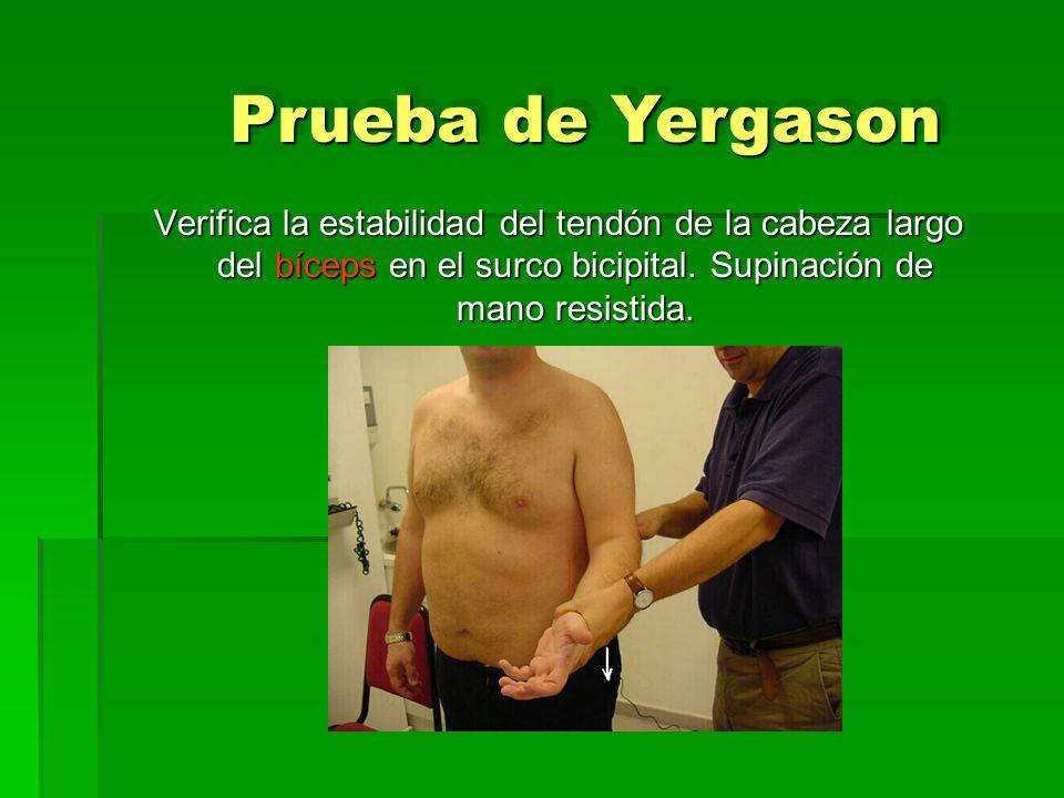 Verifica la estabilidad del tendón de la cabeza largo del bíceps en el surco bicipital. Supinación de mano resistida. Prueba de Yergason