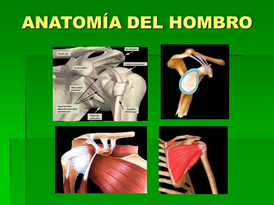 ANATOMÍA DEL HOMBRO 1 2 3 4