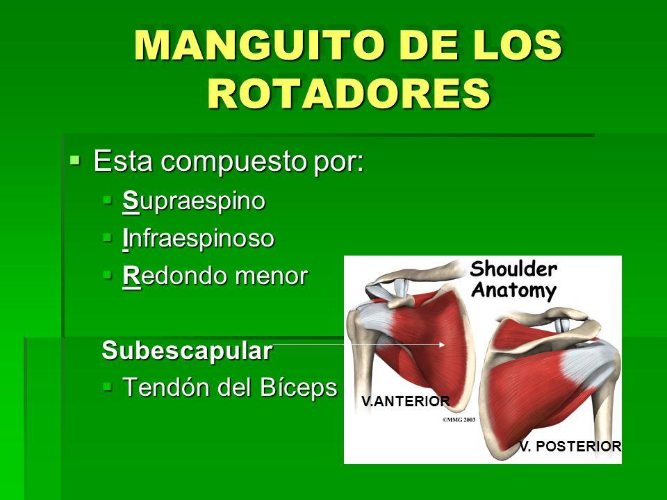 MANGUITO DE LOS ROTADORES Esta compuesto por: Esta compuesto por: Supraespino Supraespino Infraespinoso Infraespinoso Redondo menor Redondo menorSubes