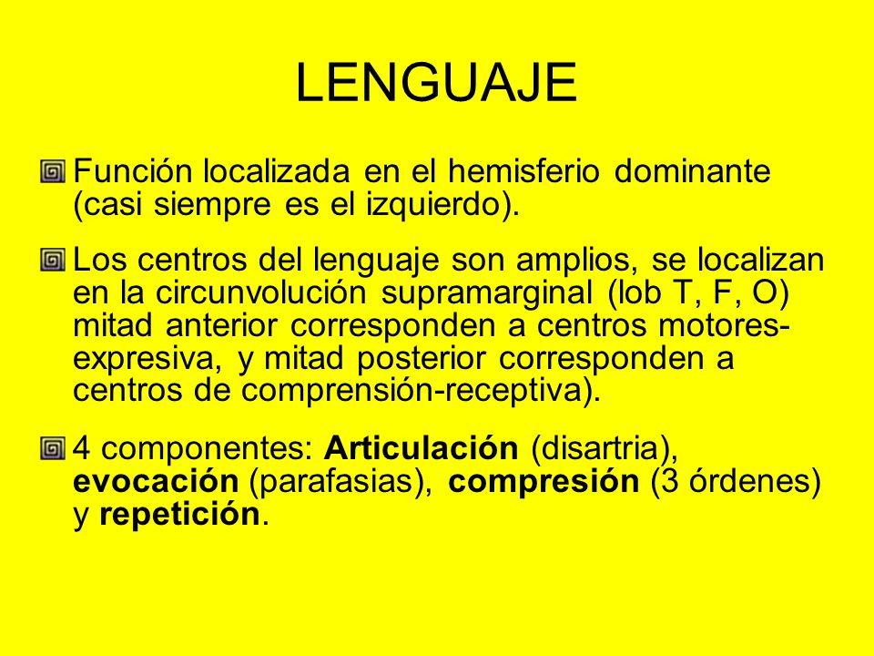 LENGUAJE Función localizada en el hemisferio dominante (casi siempre es el izquierdo). Los centros del lenguaje son amplios, se localizan en la circun