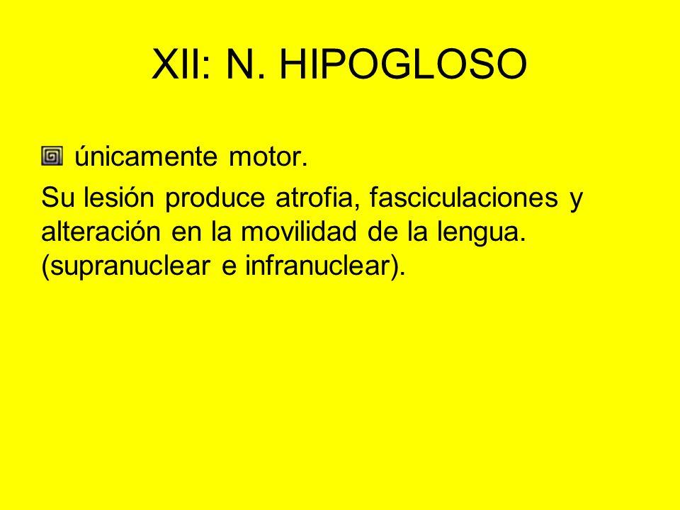 XII: N. HIPOGLOSO únicamente motor. Su lesión produce atrofia, fasciculaciones y alteración en la movilidad de la lengua. (supranuclear e infranuclear