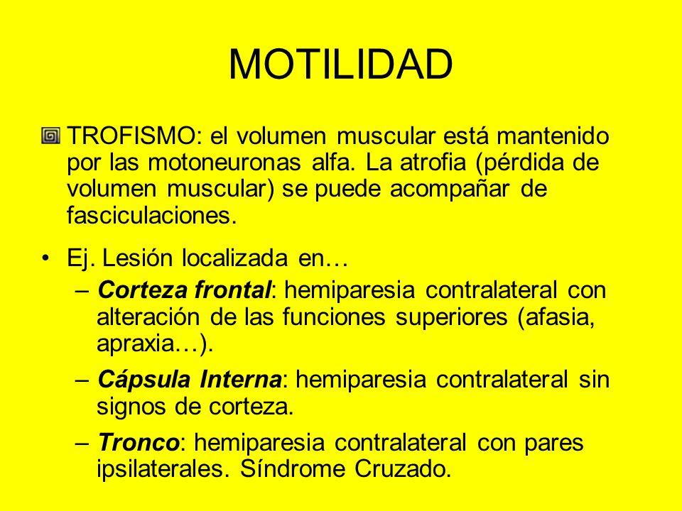 MOTILIDAD TROFISMO: el volumen muscular está mantenido por las motoneuronas alfa. La atrofia (pérdida de volumen muscular) se puede acompañar de fasci