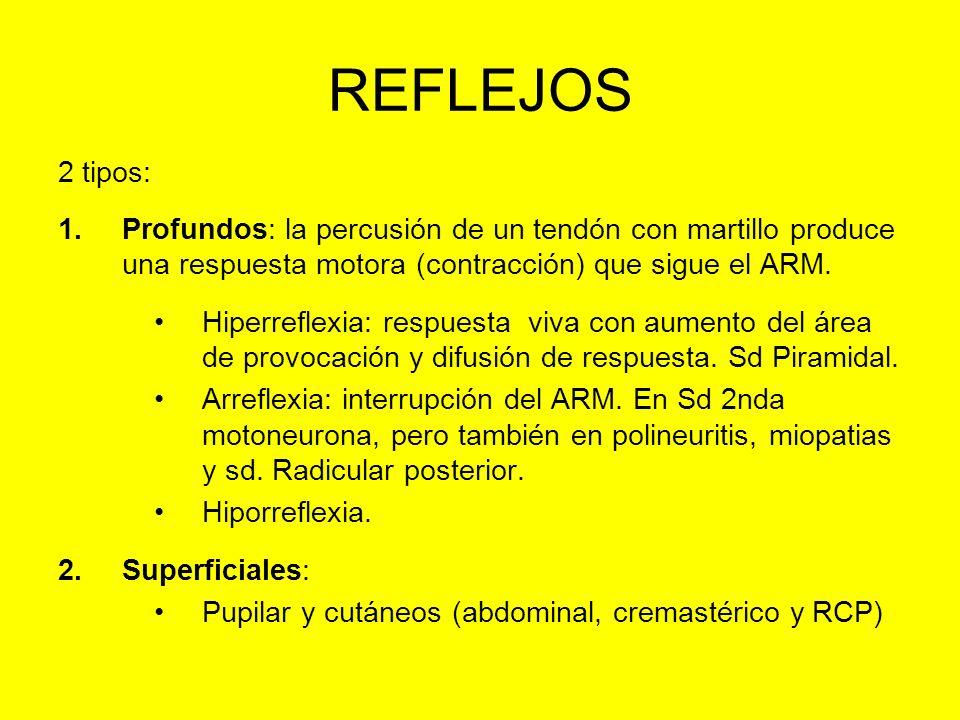 REFLEJOS 2 tipos: 1.Profundos: la percusión de un tendón con martillo produce una respuesta motora (contracción) que sigue el ARM. Hiperreflexia: resp