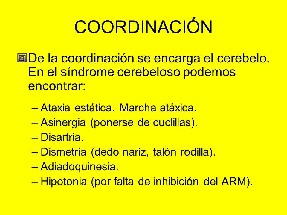 COORDINACIÓN De la coordinación se encarga el cerebelo. En el síndrome cerebeloso podemos encontrar: –Ataxia estática. Marcha atáxica. –Asinergia (pon