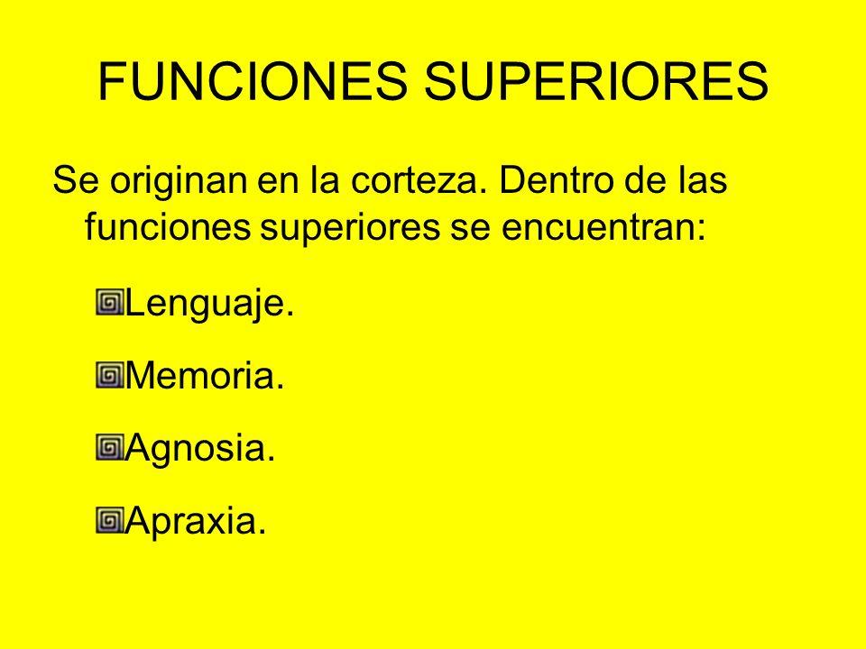 FUNCIONES SUPERIORES Se originan en la corteza. Dentro de las funciones superiores se encuentran: Lenguaje. Memoria. Agnosia. Apraxia.