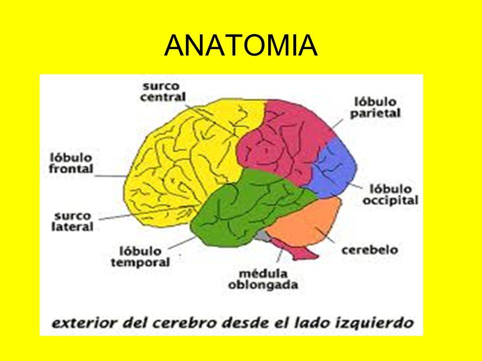 El Sd.de la 1ª motoneurona y de la 2ª se manifiestan con paresia.