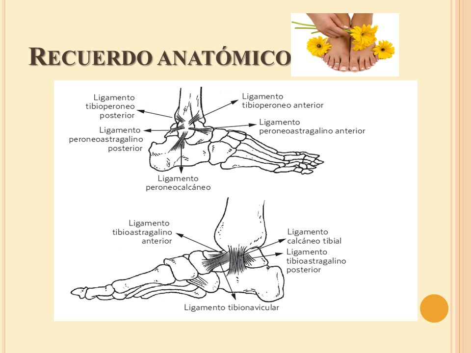B IBLIOGRAFÍA Ivins D.Acute ankle sprain: an update.