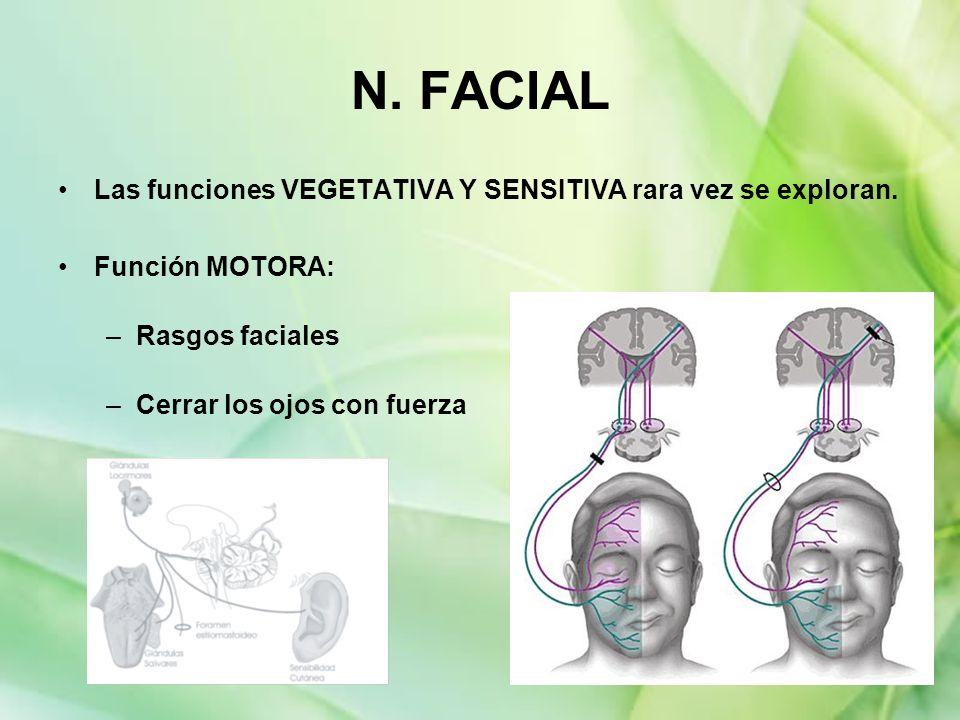 N. FACIAL Las funciones VEGETATIVA Y SENSITIVA rara vez se exploran. Función MOTORA: –Rasgos faciales –Cerrar los ojos con fuerza