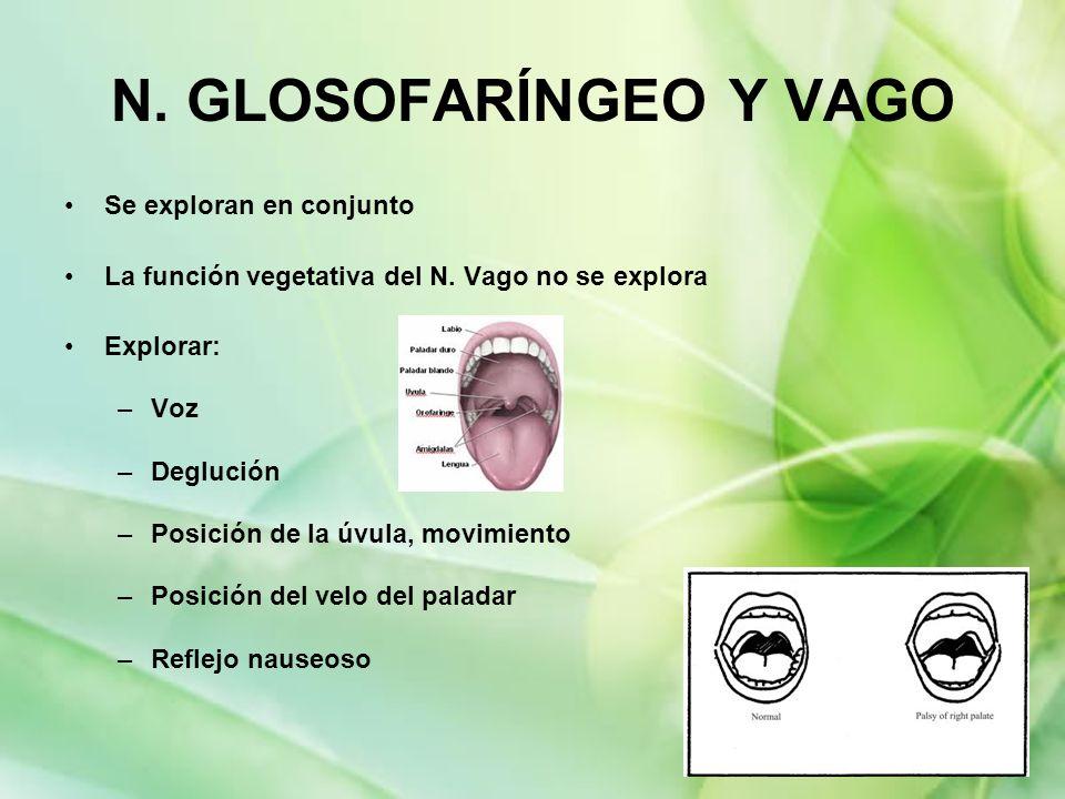 N. GLOSOFARÍNGEO Y VAGO Se exploran en conjunto La función vegetativa del N. Vago no se explora Explorar: –Voz –Deglución –Posición de la úvula, movim