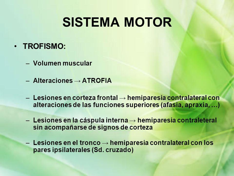 TROFISMO: –Volumen muscular –Alteraciones ATROFIA –Lesiones en corteza frontal hemiparesia contralateral con alteraciones de las funciones superiores