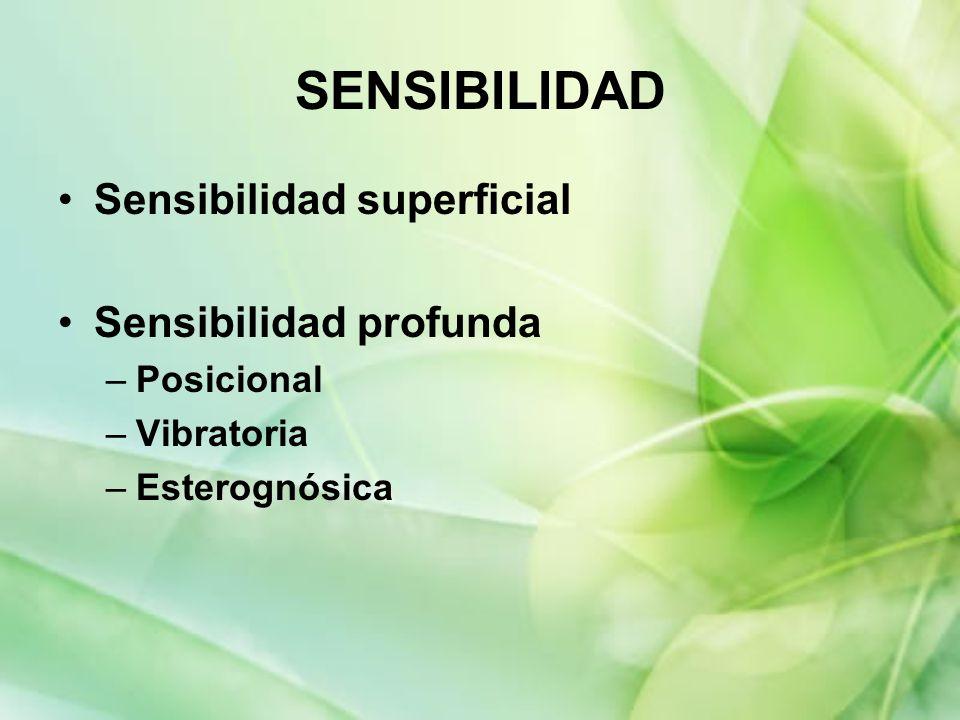 SENSIBILIDAD Sensibilidad superficial Sensibilidad profunda –Posicional –Vibratoria –Esterognósica