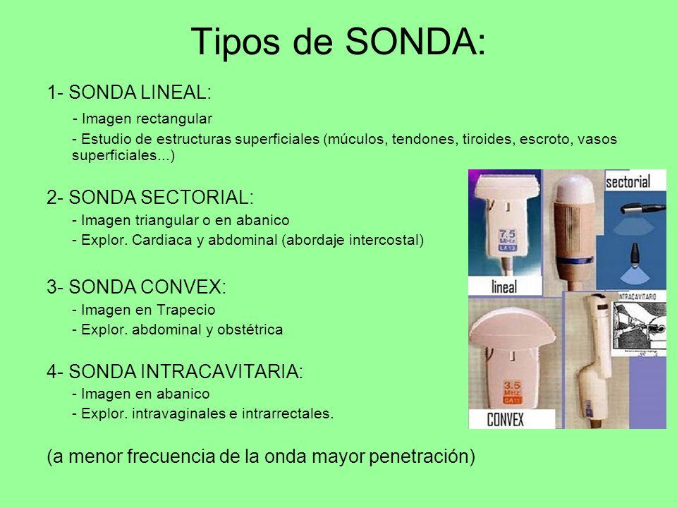 Tipos de SONDA: 1- SONDA LINEAL: - Imagen rectangular - Estudio de estructuras superficiales (múculos, tendones, tiroides, escroto, vasos superficiale