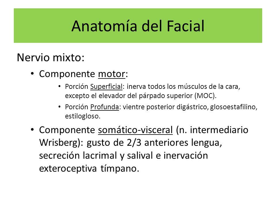 Anatomía del Facial Nervio mixto: Componente motor: Porción Superficial: inerva todos los músculos de la cara, excepto el elevador del párpado superio