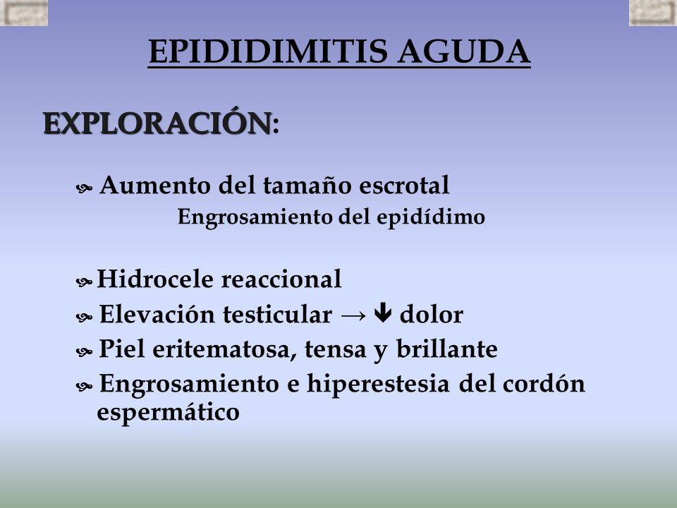 EXPLORACIÓN EXPLORACIÓN: Aumento del tamaño escrotal Engrosamiento del epidídimo Hidrocele reaccional Elevación testicular dolor Piel eritematosa, ten