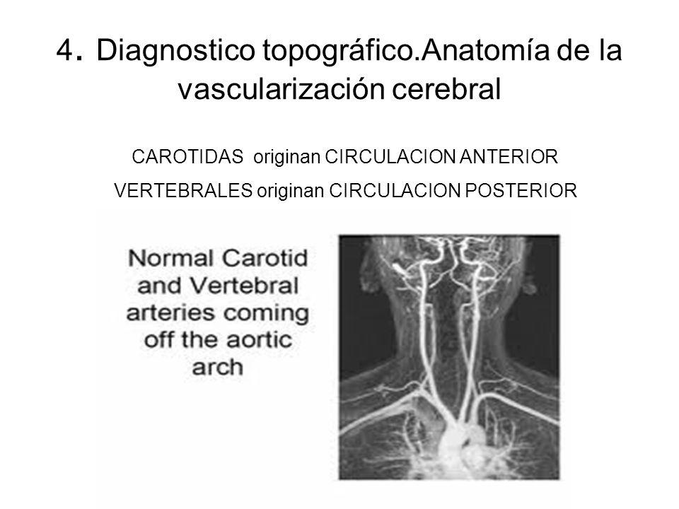 CAROTIDAS originan CIRCULACION ANTERIOR VERTEBRALES originan CIRCULACION POSTERIOR 4. Diagnostico topográfico.Anatomía de la vascularización cerebral