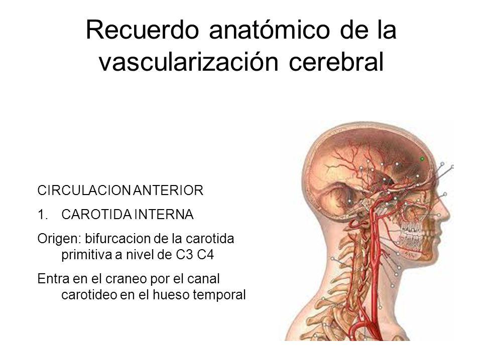 Recuerdo anatómico de la vascularización cerebral CIRCULACION ANTERIOR 1.CAROTIDA INTERNA Origen: bifurcacion de la carotida primitiva a nivel de C3 C