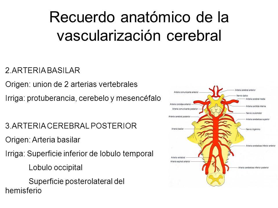 Recuerdo anatómico de la vascularización cerebral 2.ARTERIA BASILAR Origen: union de 2 arterias vertebrales Irriga: protuberancia, cerebelo y mesencéf