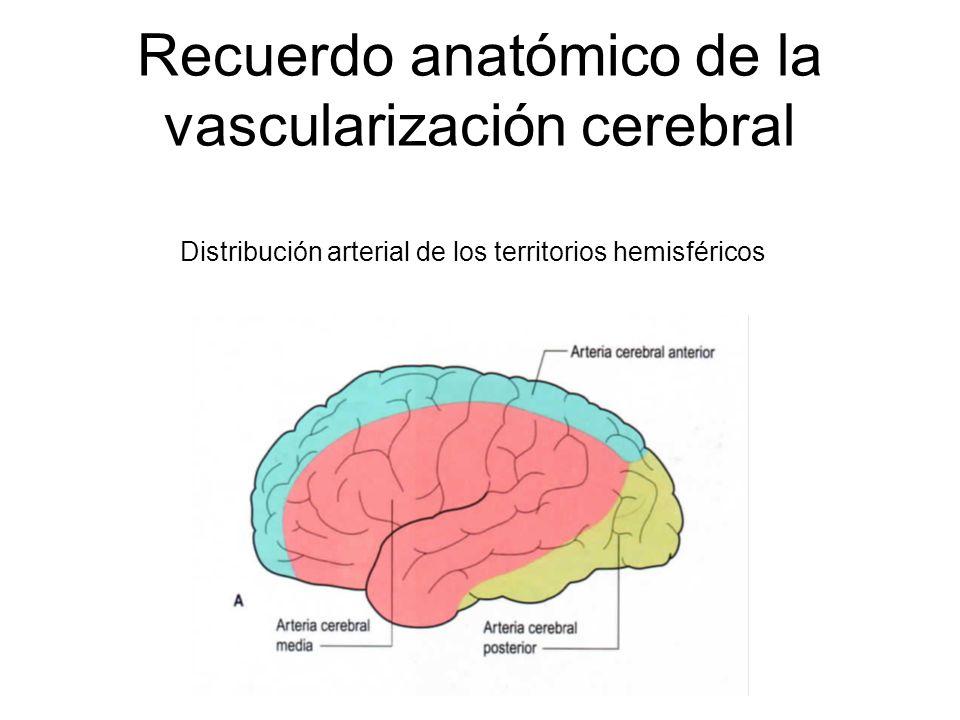 Recuerdo anatómico de la vascularización cerebral Distribución arterial de los territorios hemisféricos