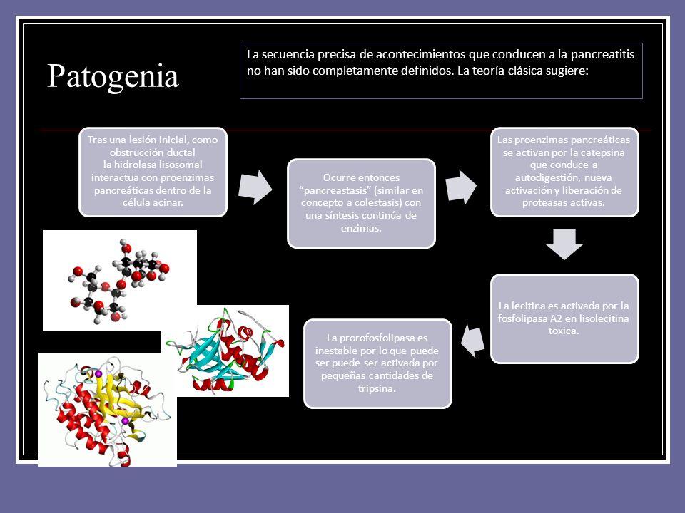 Patogenia Tras una lesión inicial, como obstrucción ductal la hidrolasa lisosomal interactua con proenzimas pancreáticas dentro de la célula acinar. O