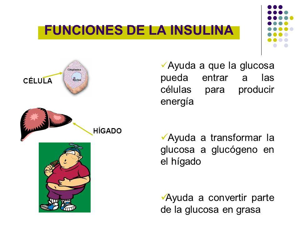 FUNCIONES DE LA INSULINA Ayuda a que la glucosa pueda entrar a las células para producir energía Ayuda a transformar la glucosa a glucógeno en el híga