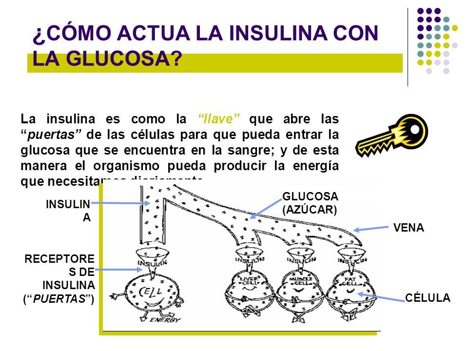 ¿ CÓMO ACTUA LA INSULINA CON LA GLUCOSA? La insulina es como la llave que abre laspuertas de las células para que pueda entrar la glucosa que se encue