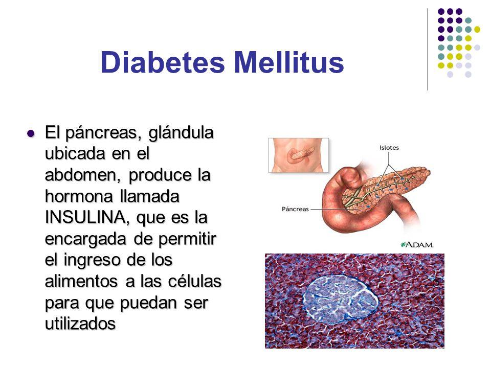 El páncreas, glándula ubicada en el abdomen, produce la hormona llamada INSULINA, que es la encargada de permitir el ingreso de los alimentos a las cé