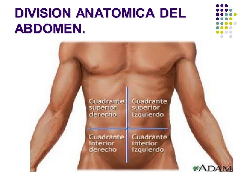 DIVISION ANATOMICA DEL ABDOMEN.