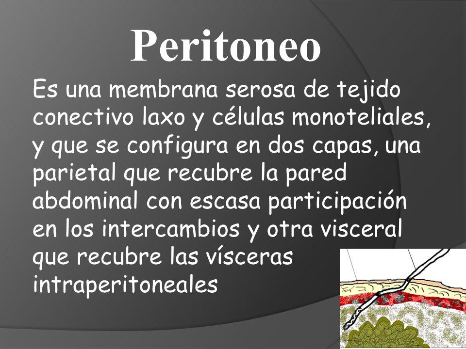 La membrana peritoneal esta compuesta por: 1.- Un endotelio capilar con una capa continua de células mayoritariamente no fenestradas, con uniones intercelulares, y soportado por una membrana basal subendotelial.
