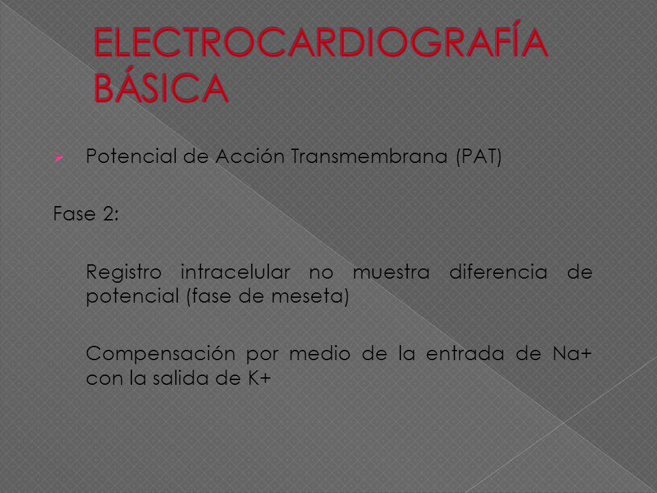 Potencial de Acción Transmembrana (PAT) Fase 2: Registro intracelular no muestra diferencia de potencial (fase de meseta) Compensación por medio de la