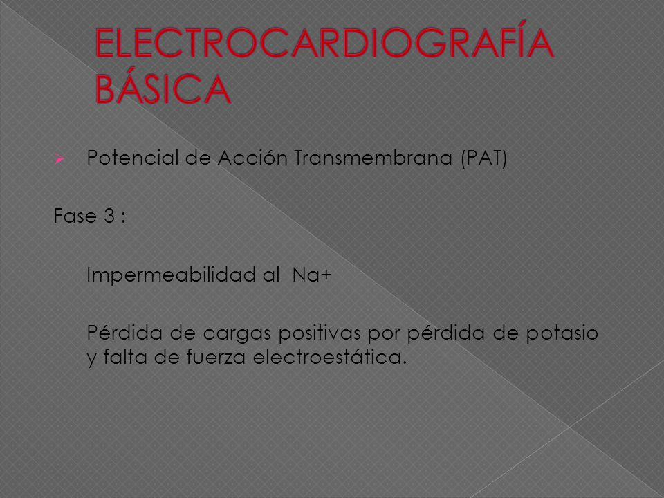 Potencial de Acción Transmembrana (PAT) Fase 3 : Impermeabilidad al Na+ Pérdida de cargas positivas por pérdida de potasio y falta de fuerza electroes