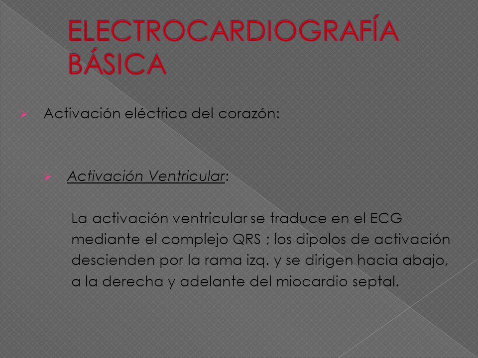 Activación eléctrica del corazón: Activación Ventricular: La activación ventricular se traduce en el ECG mediante el complejo QRS ; los dipolos de act