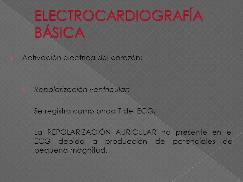 Activación eléctrica del corazón: Repolarización ventricular: Se registra como onda T del ECG. La REPOLARIZACIÓN AURICULAR no presente en el ECG debid