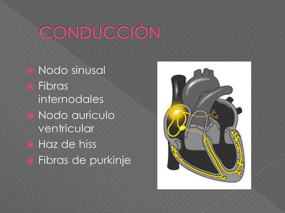 Nodo sinusal Fibras internodales Nodo auriculo ventricular Haz de hiss Fibras de purkinje