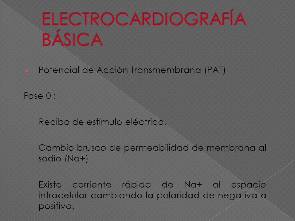 Potencial de Acción Transmembrana (PAT) Fase 0 : Recibo de estímulo eléctrico. Cambio brusco de permeabilidad de membrana al sodio (Na+) Existe corrie