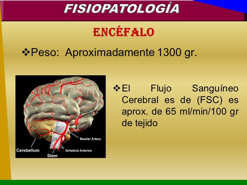 Encéfalo Peso: Aproximadamente 1300 gr. El Flujo Sanguíneo Cerebral es de (FSC) es aprox. de 65 ml/min/100 gr de tejido