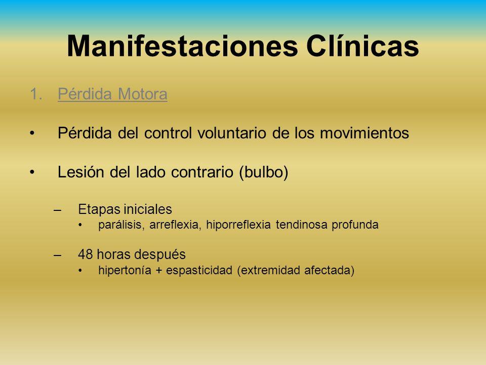 Manifestaciones Clínicas 1.Pérdida Motora Pérdida del control voluntario de los movimientos Lesión del lado contrario (bulbo) –Etapas iniciales paráli