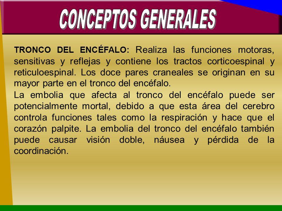 TRONCO DEL ENCÉFALO: Realiza las funciones motoras, sensitivas y reflejas y contiene los tractos corticoespinal y reticuloespinal. Los doce pares cran