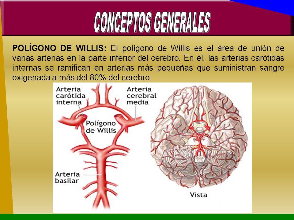 POLÍGONO DE WILLIS: El polígono de Willis es el área de unión de varias arterias en la parte inferior del cerebro. En él, las arterias carótidas inter