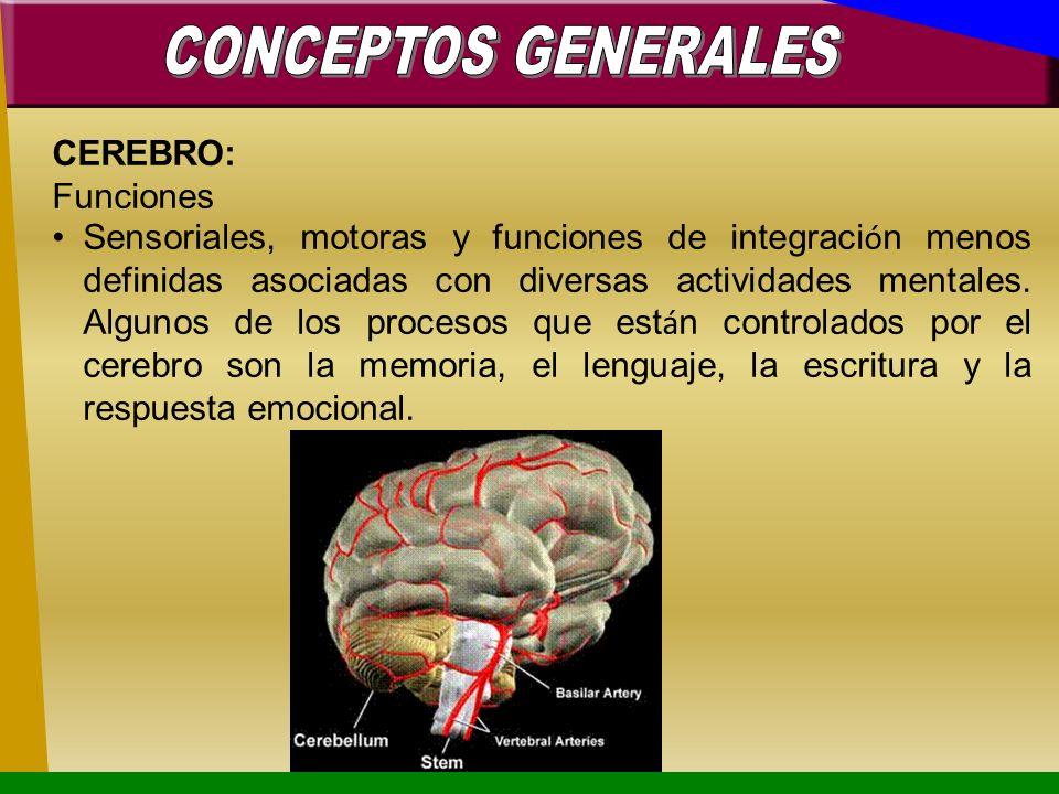CEREBRO: Funciones Sensoriales, motoras y funciones de integraci ó n menos definidas asociadas con diversas actividades mentales. Algunos de los proce