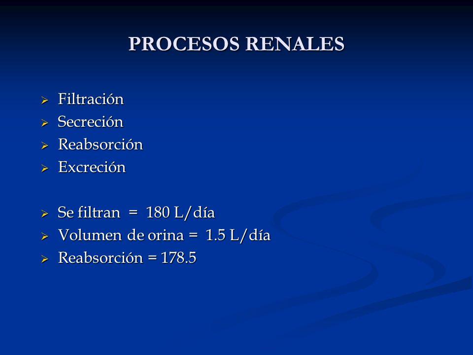 Filtración Filtración Secreción Secreción Reabsorción Reabsorción Excreción Excreción Se filtran = 180 L/día Se filtran = 180 L/día Volumen de orina =