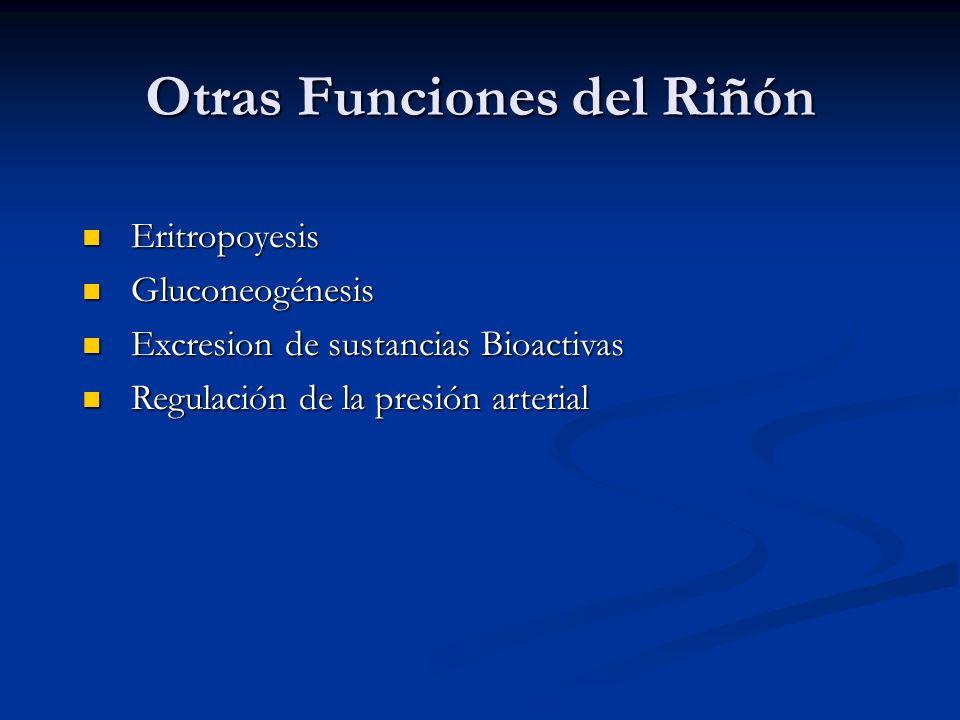 Otras Funciones del Riñón Eritropoyesis Eritropoyesis Gluconeogénesis Gluconeogénesis Excresion de sustancias Bioactivas Excresion de sustancias Bioac