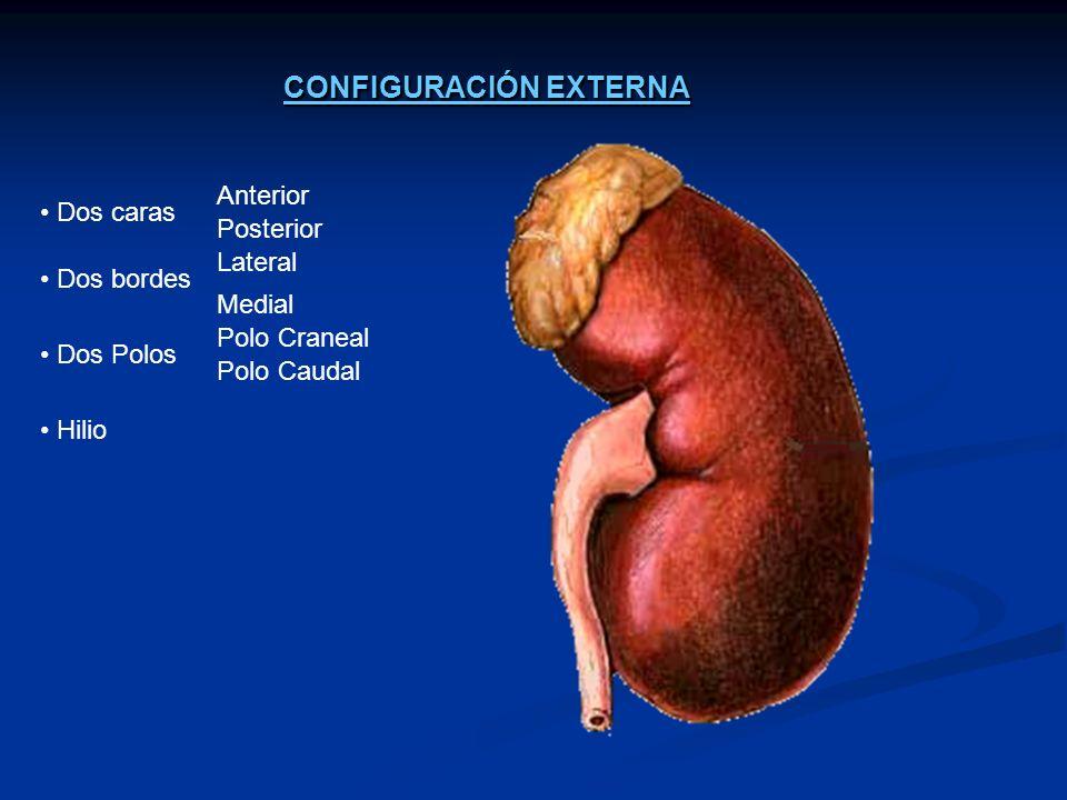 1.ENFERMEDADES GLOMERULARES a) Enfermedad Glomerular primaria a) Enfermedad Glomerular primaria Esclerosis focal y segmentaria.