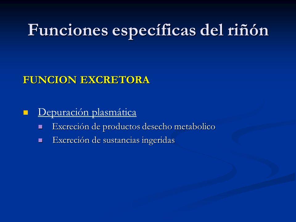 Funciones específicas del riñón FUNCION EXCRETORA Depuración plasmática Excreción de productos desecho metabolico Excreción de productos desecho metab