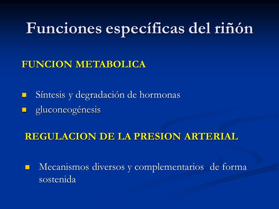 Funciones específicas del riñón FUNCION METABOLICA Síntesis y degradación de hormonas Síntesis y degradación de hormonas gluconeogénesis gluconeogénes