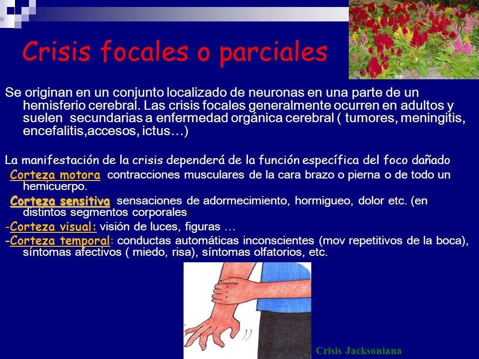Crisis focales o parciales Se originan en un conjunto localizado de neuronas en una parte de un hemisferio cerebral. Las crisis focales generalmente o